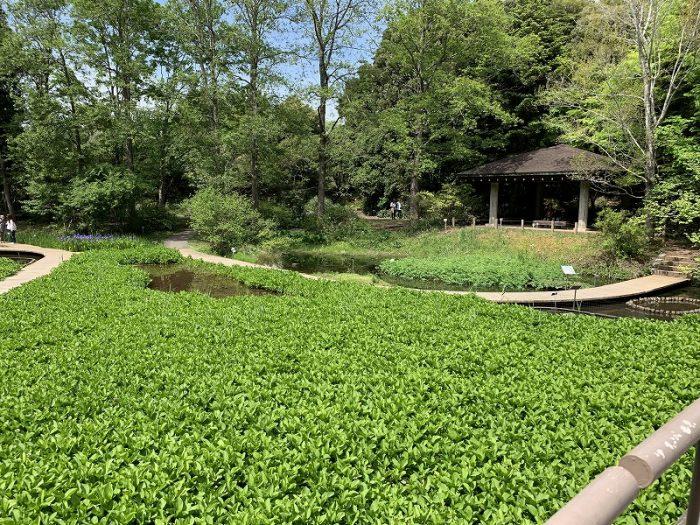 水生植物の池
