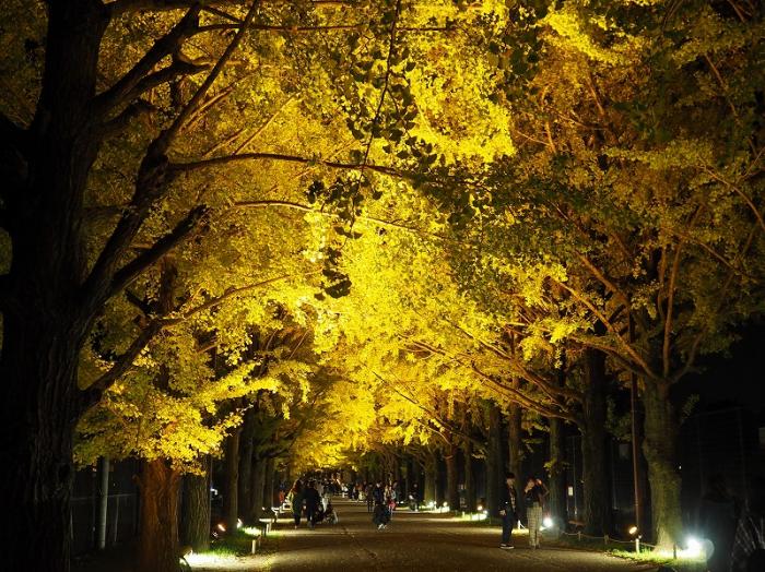 昭和記念公園 かたらいのイチョウ並木