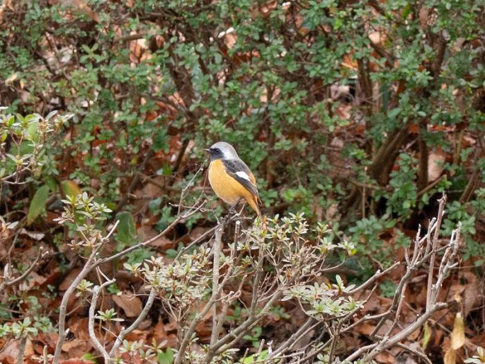 県立相模原公園 鳥