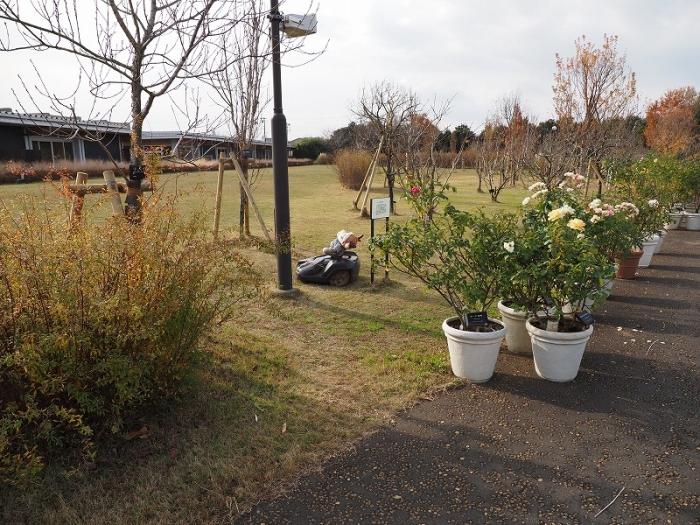 花菜ガーデン