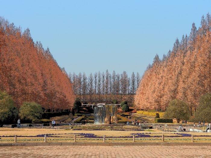 相模原公園 メタセコイヤ並木