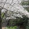 町田忠生公園